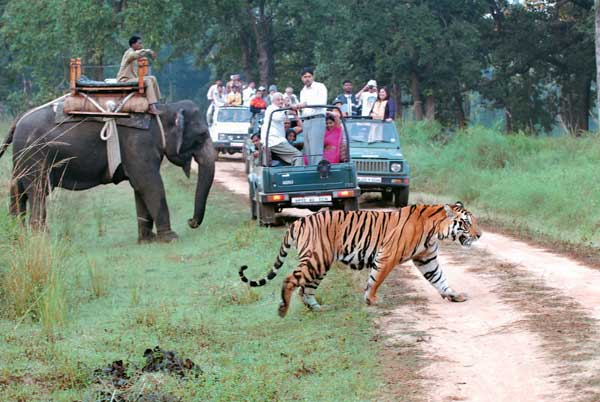 Jeep and Elephant Safari at Jim Corbett