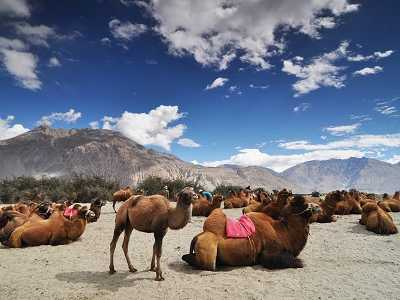 Leh Ladakh Tour in 7 Days with 5 Star Hotels