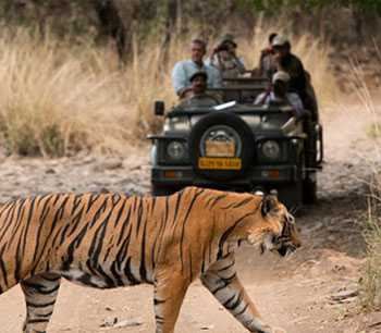 4 Days Rajasthan Tour Package from Bhopal